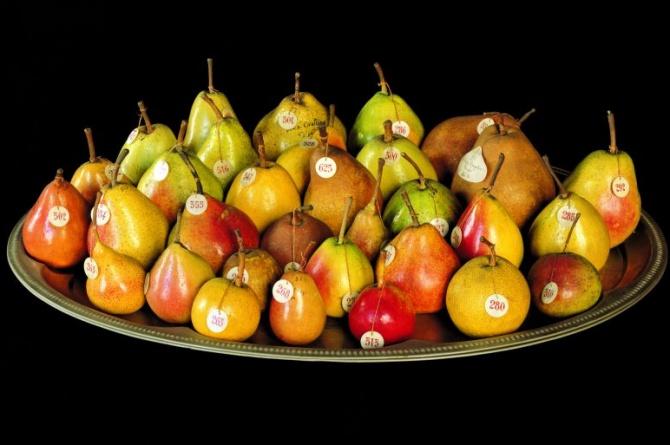 Il museo della frutta