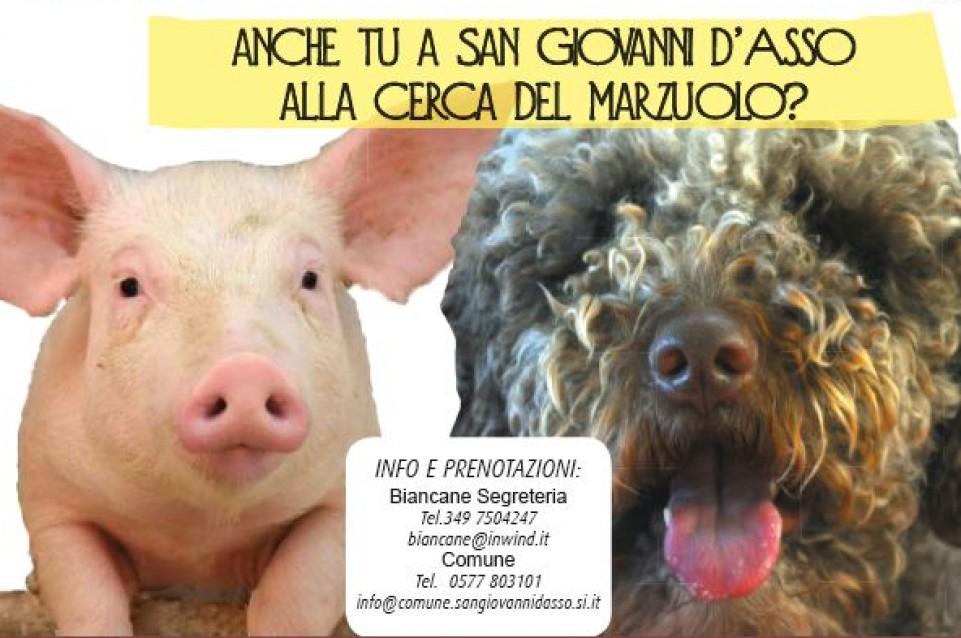 Il 21 e il 22 marzo a San Giovanni d'Asso torna il profumo del Tartufo Marzuolo