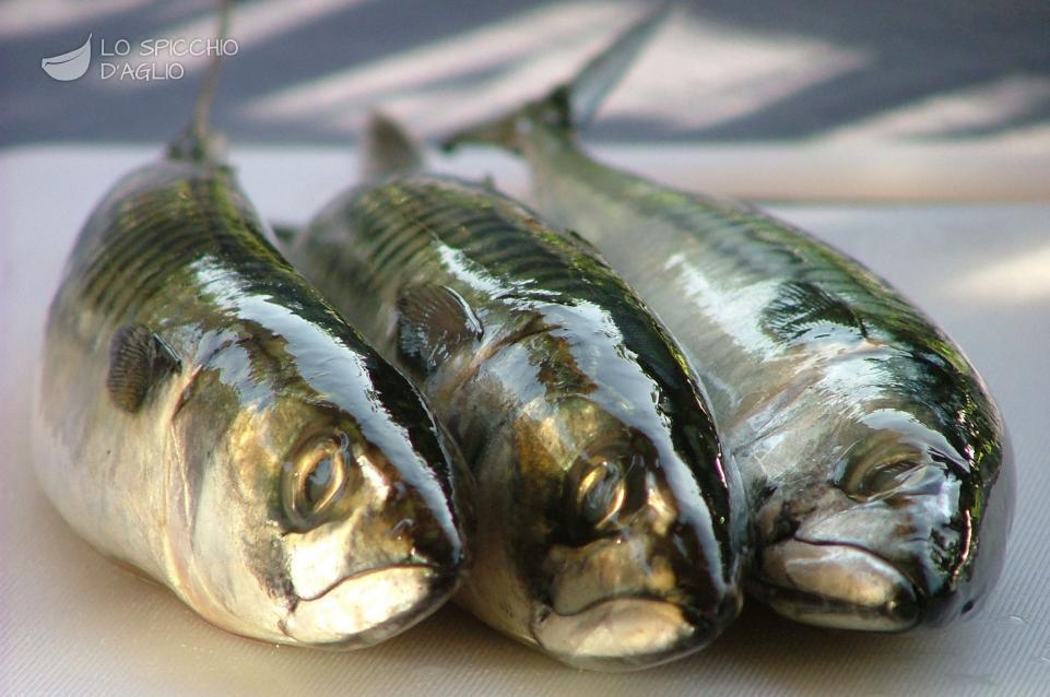 Sgombro Un Pesce Dalle Mille Proprietà Ecco Come Sceglierlo E