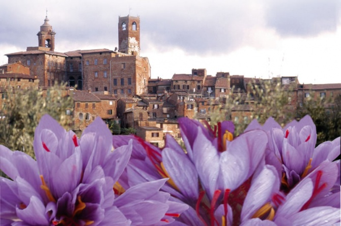 Zafferiamo: dal 24 al 26 ottobre la tre giorni di Città della Pieve dedicata allo zafferano